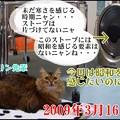 Photos: 2020-03-16-Mon-03-Stove-Purinchan_CIMG3363