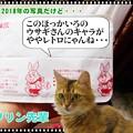 Photos: 2020-03-16-Mon-04-Rabbit-Kairo_DSCN7208