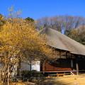 Photos: 180129_22_蠟梅・S18200(西方寺) (16)