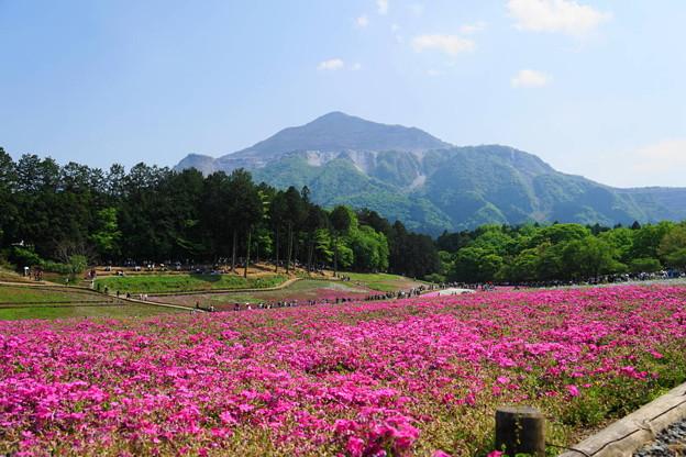 rs-180429_11_芝桜と武甲山・S18200・α60(羊山公園) (5)