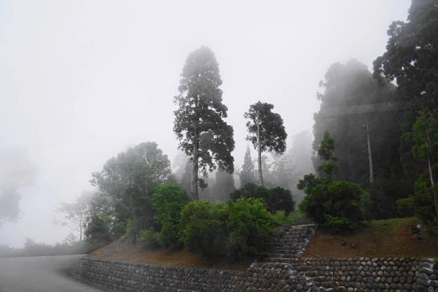 写真: 180611_20_霧の風景・S18200・α60(美女平) (1)