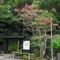 Photos: 180911_11_境内の様子・S1650・α60(妙本寺) (1)
