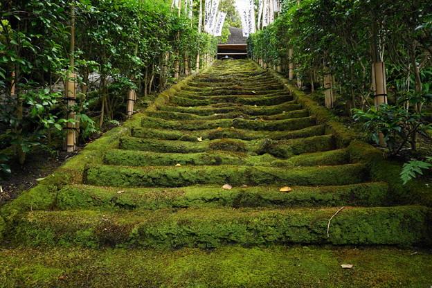 180911_54_観音堂への苔むした階段・S1650・α60(杉本寺) (4)
