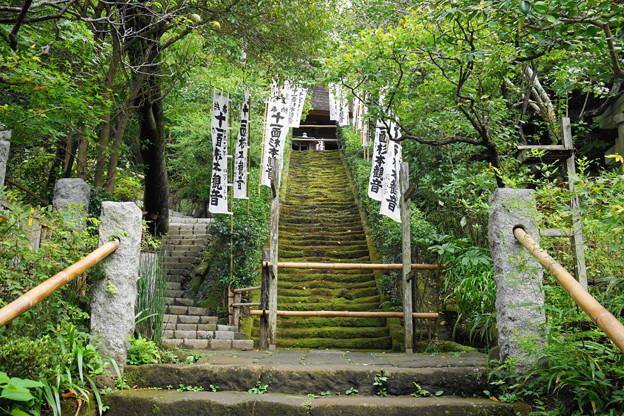 180911_56_苔の階段・S1650・α60(杉本寺) (1)