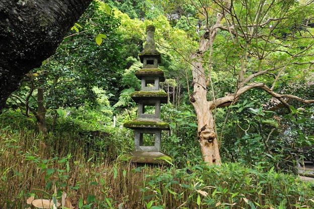 180911_64_苔の石塔・S1650・α60(杉本寺) (1)