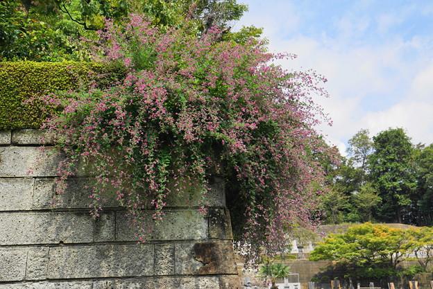 180918_44_萩の花・S18200・α60(西方寺)