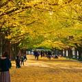 Photos: 181108_25_銀杏並木で・S18200・α60(昭和記念) (12)
