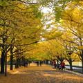 Photos: 181108_25_銀杏並木で・S18200・α60(昭和記念) (13)