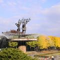 Photos: 181108_23_銀杏並木・スローシャッター・S18200・α60(昭和記念) (2)