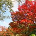Photos: 181108_19_水鳥の池辺りの紅葉・S18200・α60(昭和記念) (8)