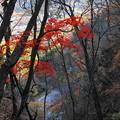 181111_F22_散策路からの紅葉・S18200・α60(吹き割の滝) (31)