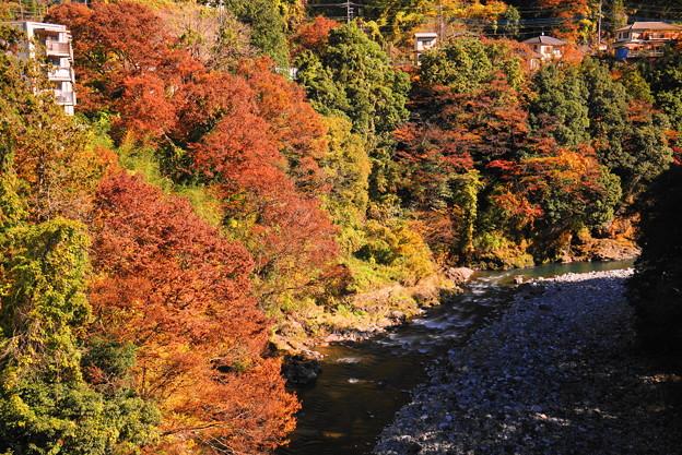 181115_03_昭和橋から下流を・S18200・α60(奥多摩) (3)
