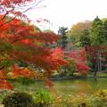 181120_01_公園の紅葉・S18200・α60(薬師池公園) (14)