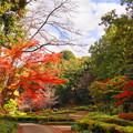 181120_03_公園の紅葉・S18200・α60(薬師池公園) (15)