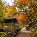 181120_03_公園の紅葉・S18200・α60(薬師池公園) (28)