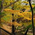 181120_03_公園の紅葉・S18200・α60(薬師池公園) (35)