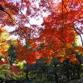 181128_01_庭園の様子・S18200・α60(殿ヶ谷庭園) (28)
