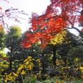 181128_01_庭園の様子・S18200・α60(殿ヶ谷庭園) (30)