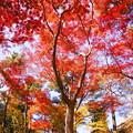 181128_01_庭園の様子・S18200・α60(殿ヶ谷庭園) (34)