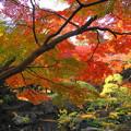 181128_01_庭園の様子・S18200・α60(殿ヶ谷庭園) (131)