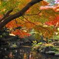 181128_01_庭園の様子・S18200・α60(殿ヶ谷庭園) (141)