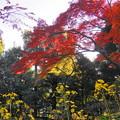 181128_01_庭園の様子・S18200・α60(殿ヶ谷庭園) (180)