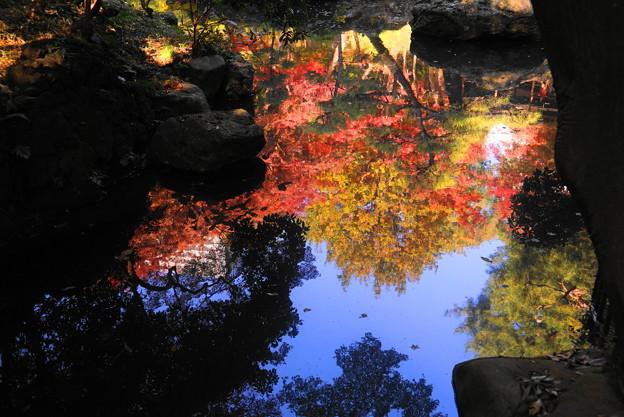 181128_01_庭園の様子・S18200・α60(殿ヶ谷庭園) (344)