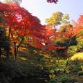 181128_01_庭園の様子・S18200・α60(殿ヶ谷庭園) (351)