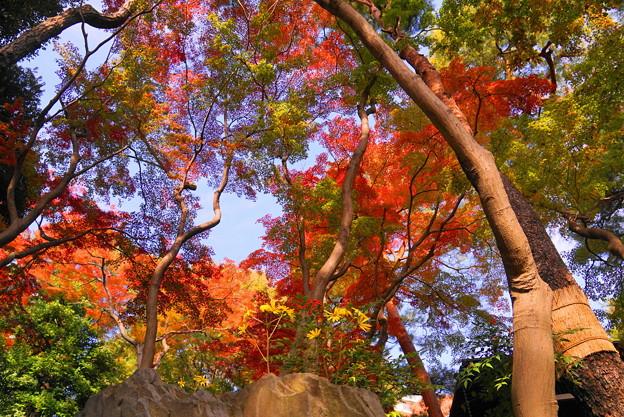 181128_01_庭園の様子・S18200・α60(殿ヶ谷庭園) (509)