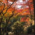 181128_01_庭園の様子・S18200・α60(殿ヶ谷庭園) (550)