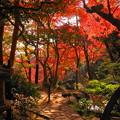181128_01_庭園の様子・S18200・α60(殿ヶ谷庭園) (612)