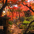 181128_01_庭園の様子・S18200・α60(殿ヶ谷庭園) (614)