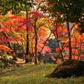 181128_01_庭園の様子・S18200・α60(殿ヶ谷庭園) (631)