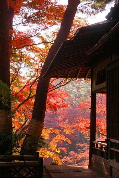 181128_01_庭園の様子・S18200・α60(殿ヶ谷庭園) (396)