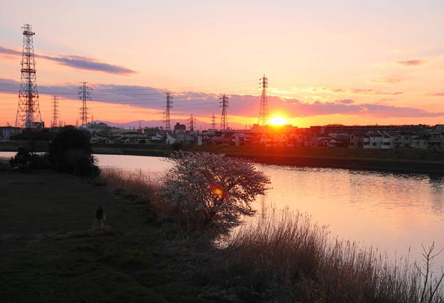 190324_Y01_夕陽と桜・S18200(鶴見川) (3)