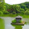 190614_47K_公園の様子・S18200(薬師池)  (1)