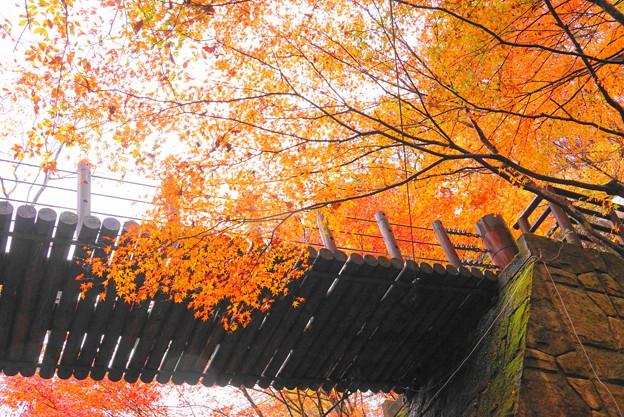 191123_S15_吊り橋を下から・S18200(花貫渓谷) (2)