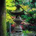 191201_α11_紅葉狩り・S18200(最乗寺) (56)