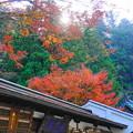 191201_α11_紅葉狩り・S18200(最乗寺) (68)