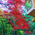 191201_α11_紅葉狩り・S18200(最乗寺) (282)