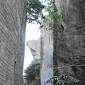 Photos: 200224_12R_鋸山の様子・RX10M3(鋸山) (19)