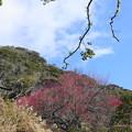 200224_29R_大仏様と紅梅・RX10M3(日本寺) (1)