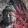 Photos: 200224_29R_大仏様と紅梅・RX10M3(日本寺) (8)