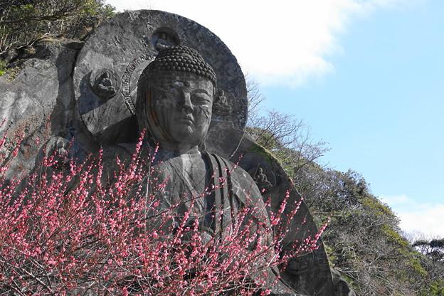 200224_29R_大仏様と紅梅・RX10M3(日本寺) (17)