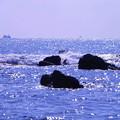 Photos: 200224_47R_海岸からの眺め・RX10M3(金谷) (6)