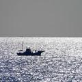Photos: 200224_64R_リュウ君・沖の漁船・RX10M3(金谷) (4)