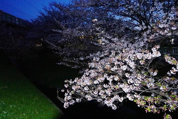 200406_70Y_夜桜・RX10M3(渋川) (1)