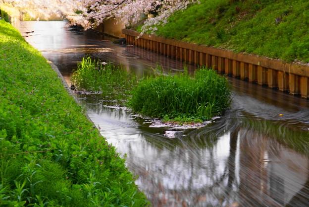 200404_51S_花びらをスローで・S18200(渋川) (64)