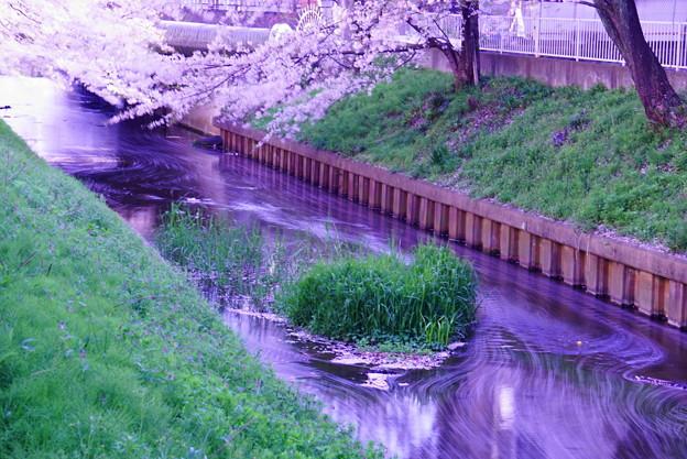 200404_51S_花びらをスローで・S18200(渋川) (148)