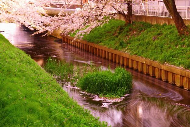 200404_51S_花びらをスローで・S18200(渋川) (150-A1)